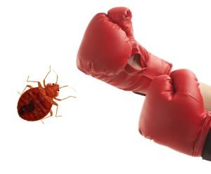 Contact Knockout Pest Control | Exterminators NYC | Long Island