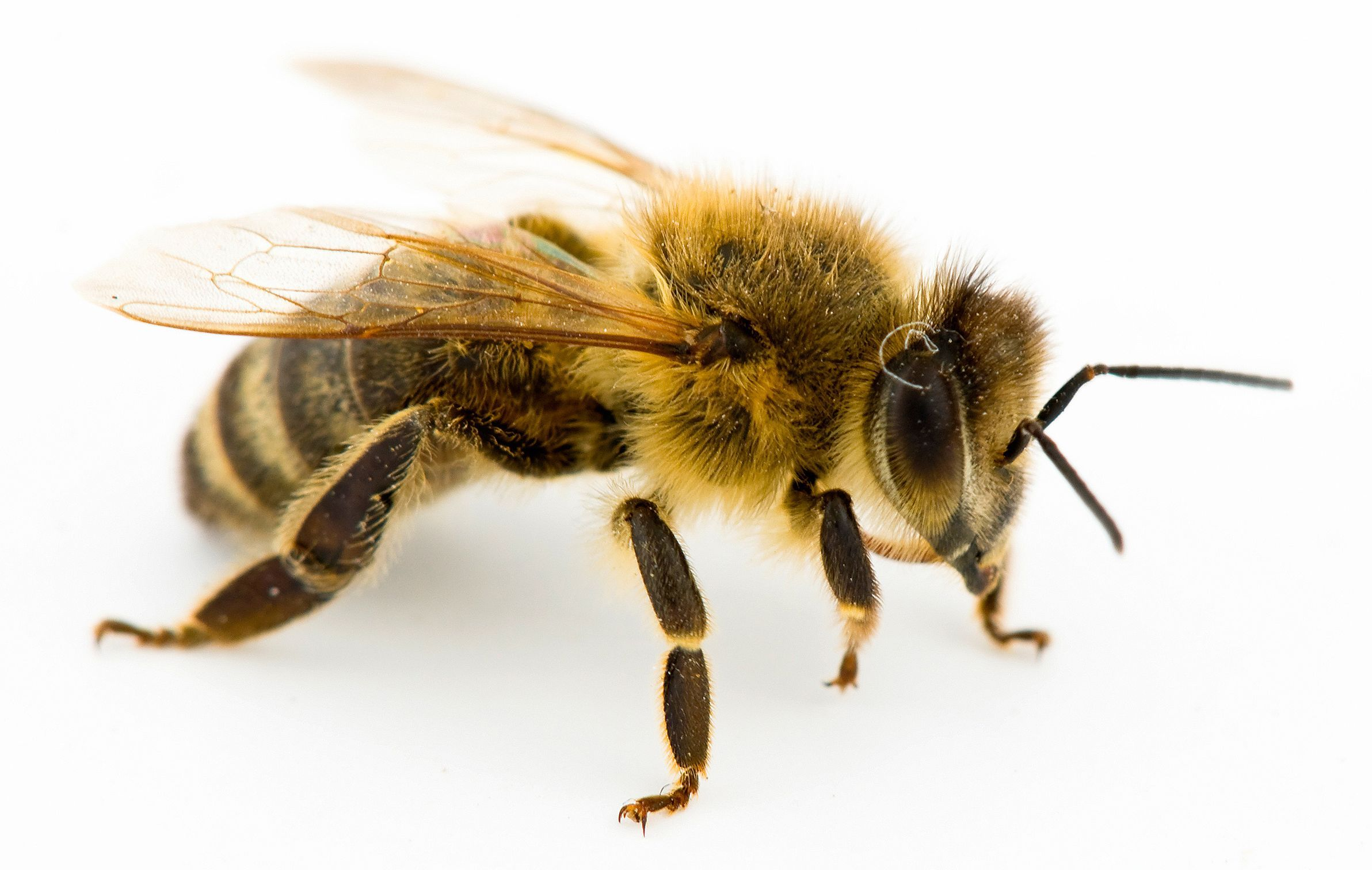 Bee Problems & Bees Nest Removal Long Island