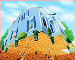 Termite Treatment Long Island   Westchester   Rockland County   NYC