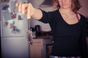 How to tell if you have Mice in NYC | Long Island