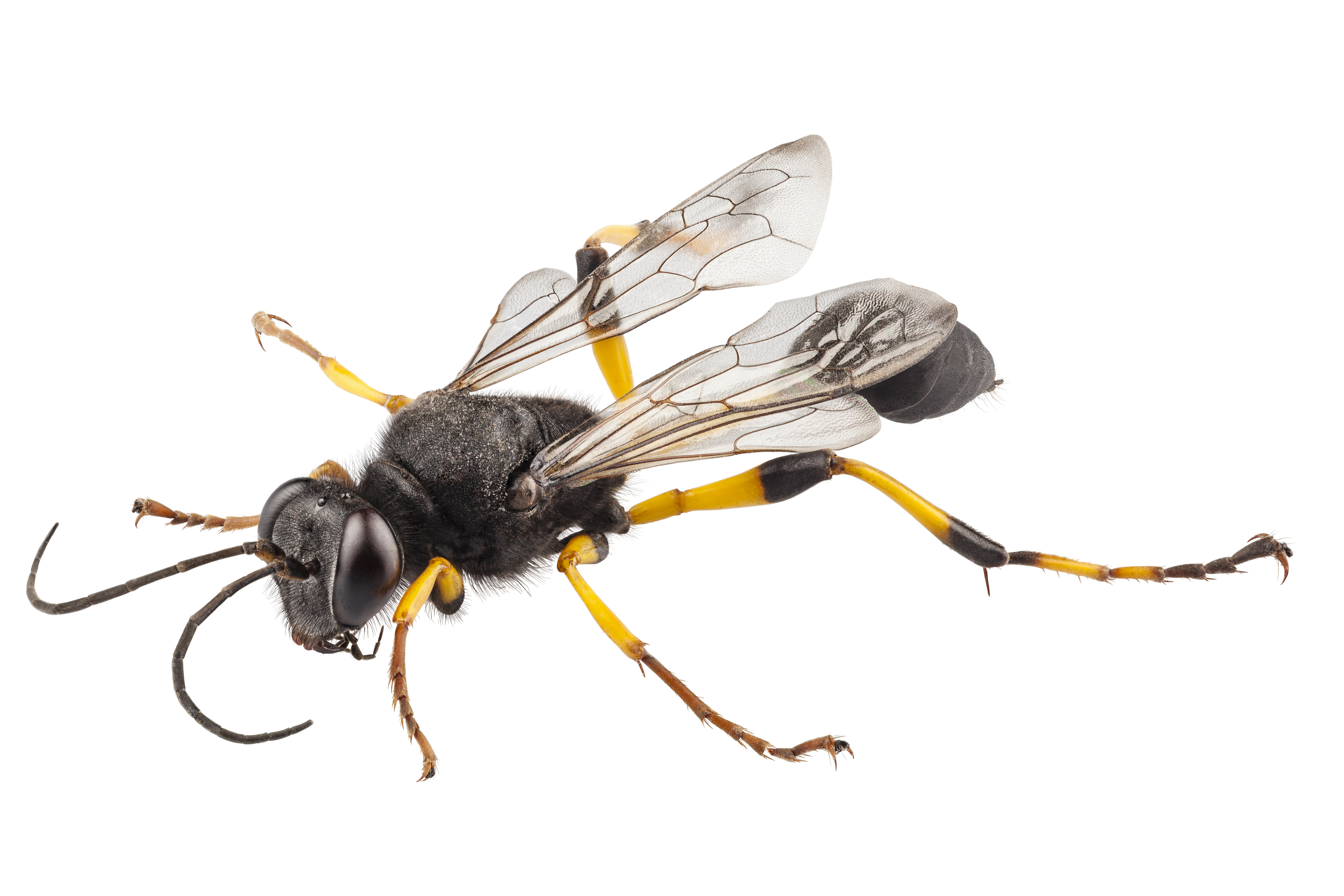 wasp Get rid of wasp and wasps, products and expertise you need for residential and commercial control of hornets and wasps.