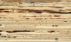 Termite Infestations Long Island | Westchester County | Rockland County | NYC