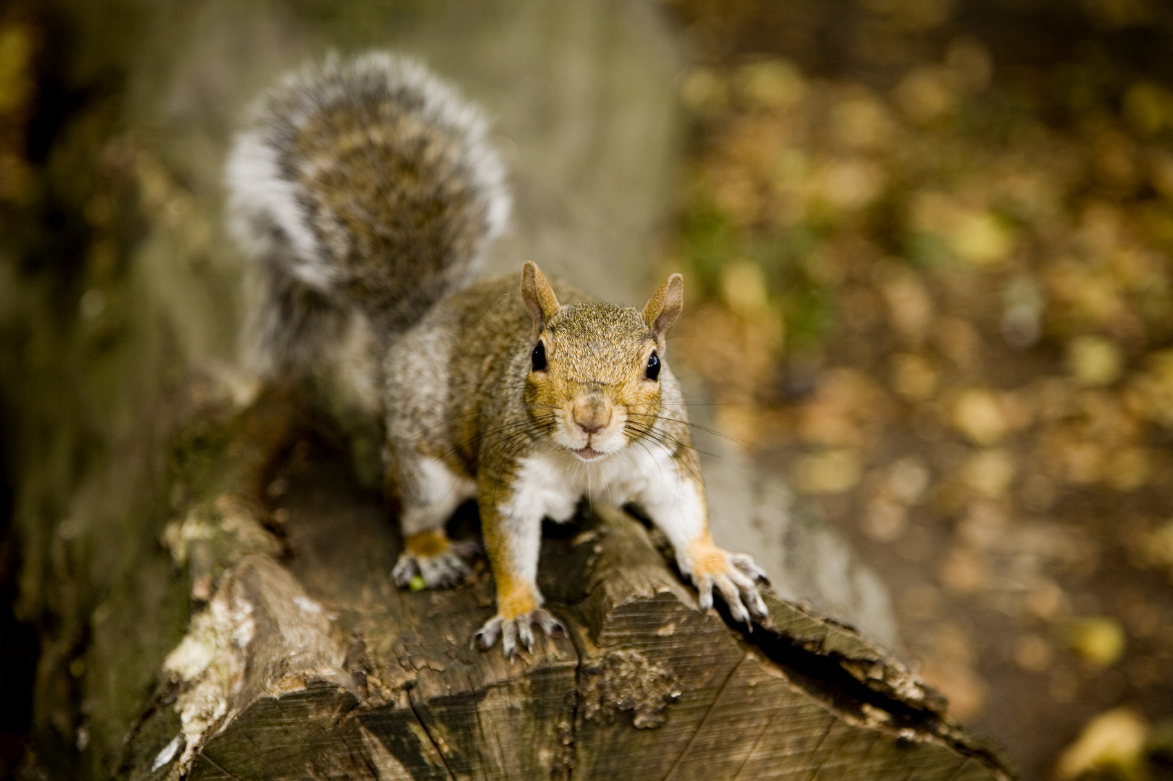 How to Keep Squirrels Away From Your Home | NYC Pest