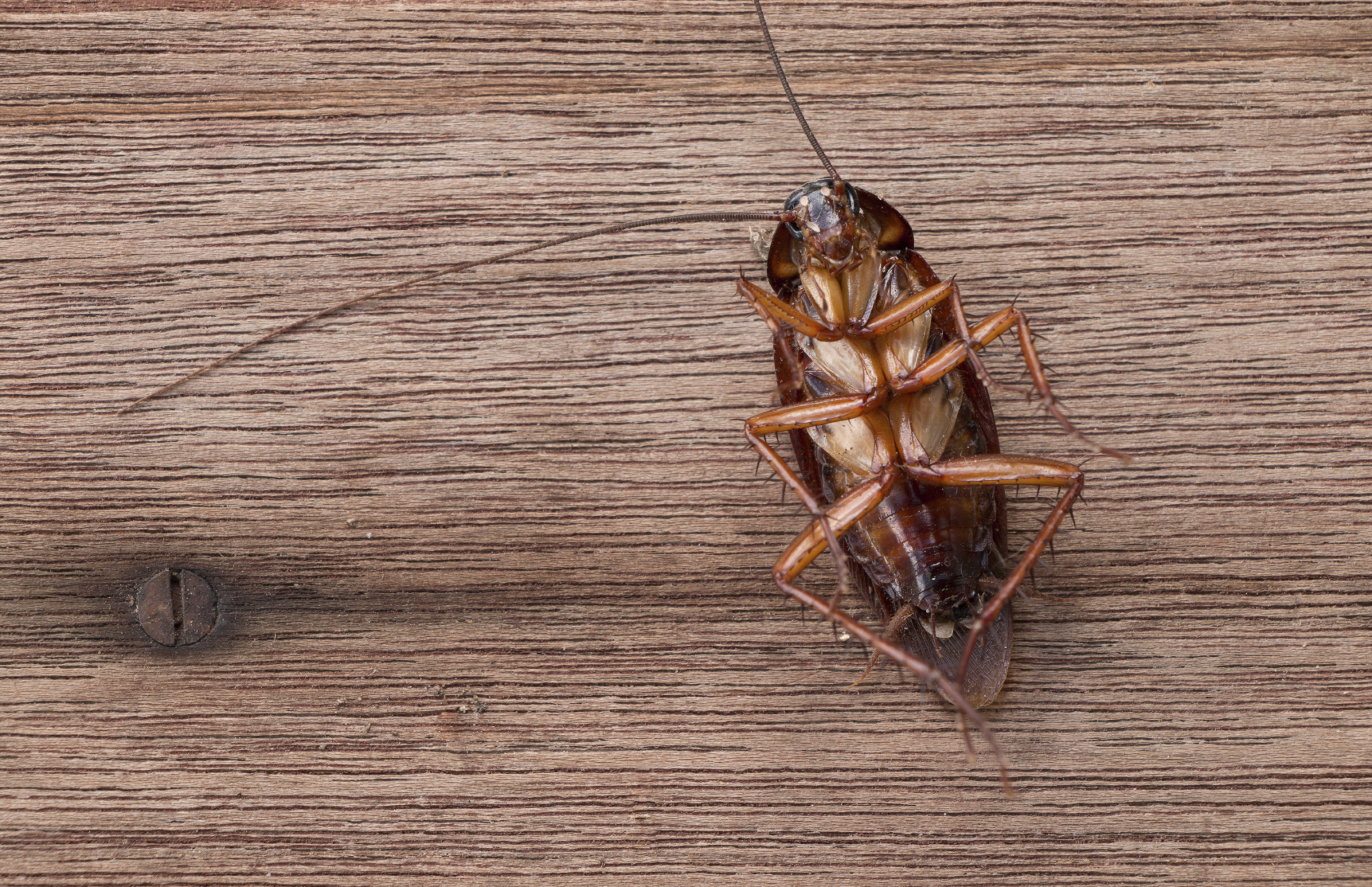 5 Facts About Cockroaches Knockout Pest Control