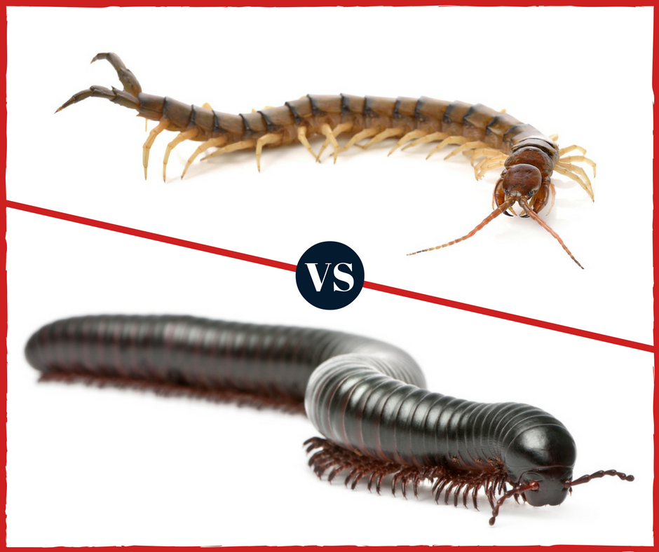 what 39 s the difference centipedes vs millipedes pest control. Black Bedroom Furniture Sets. Home Design Ideas