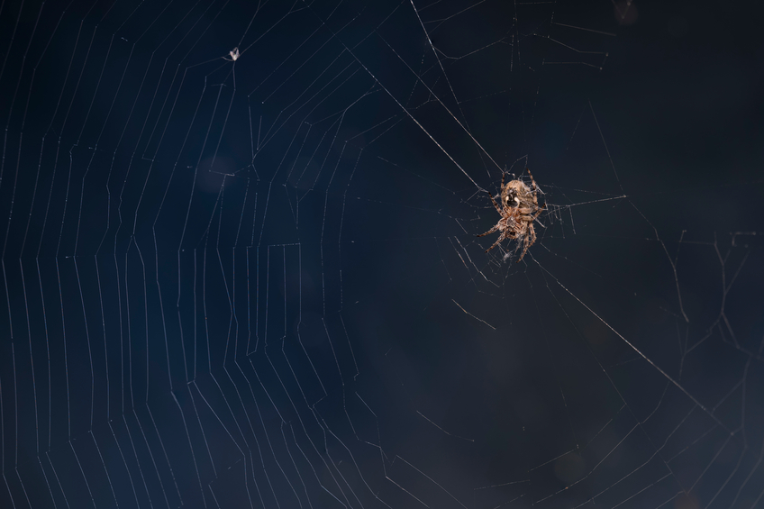 5 ways to naturally keep spiders away pest control for How to keep spiders away from your bed