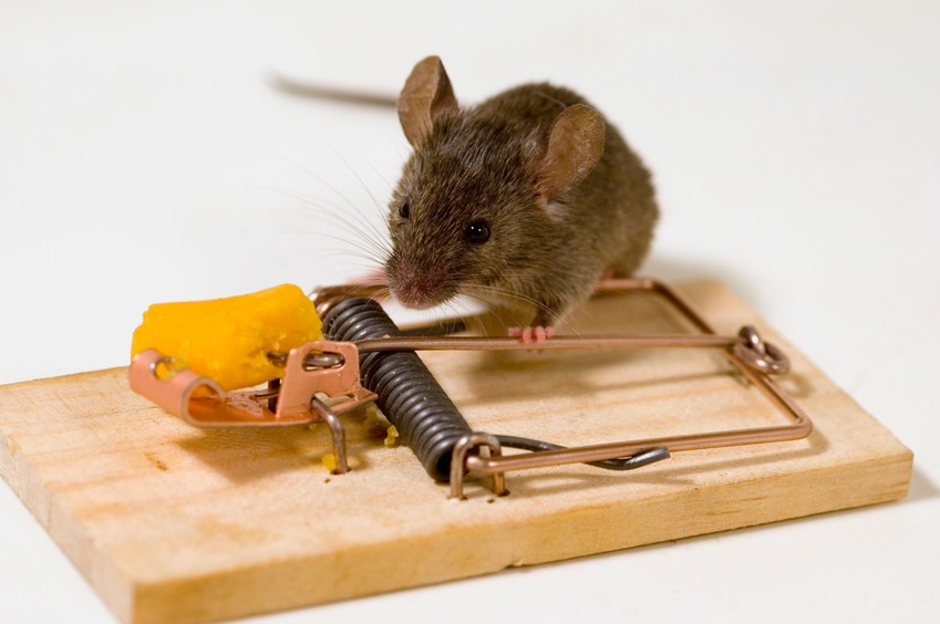 What to Know About the Mice in Your Kitchen | Pest Control