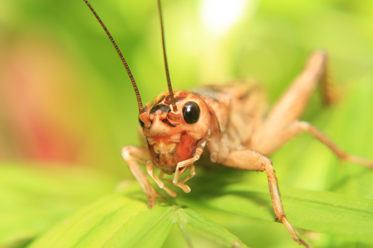 how to get rid of spider crickets in the house