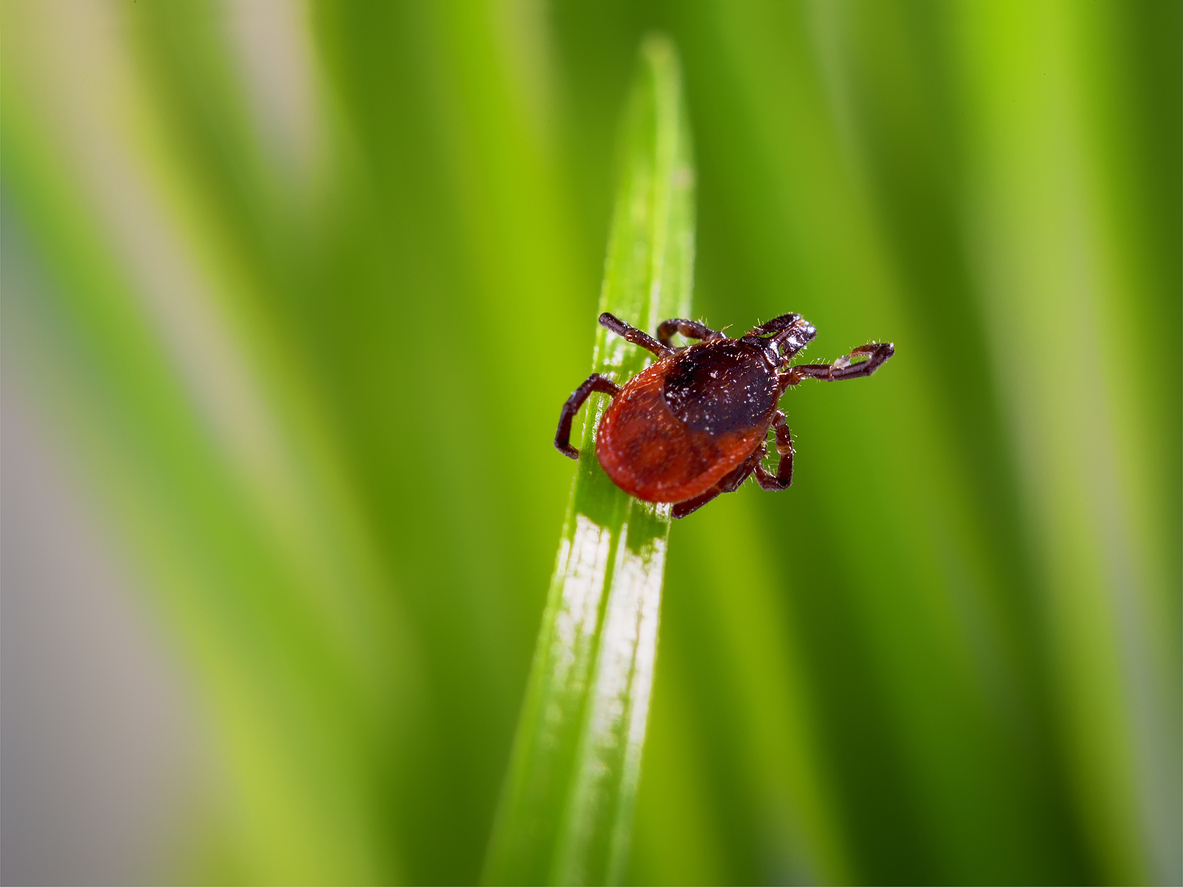 pest control in long island