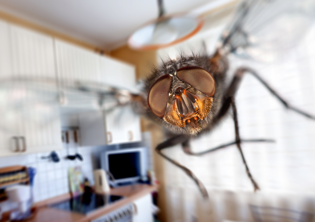 how to catch flies in your home