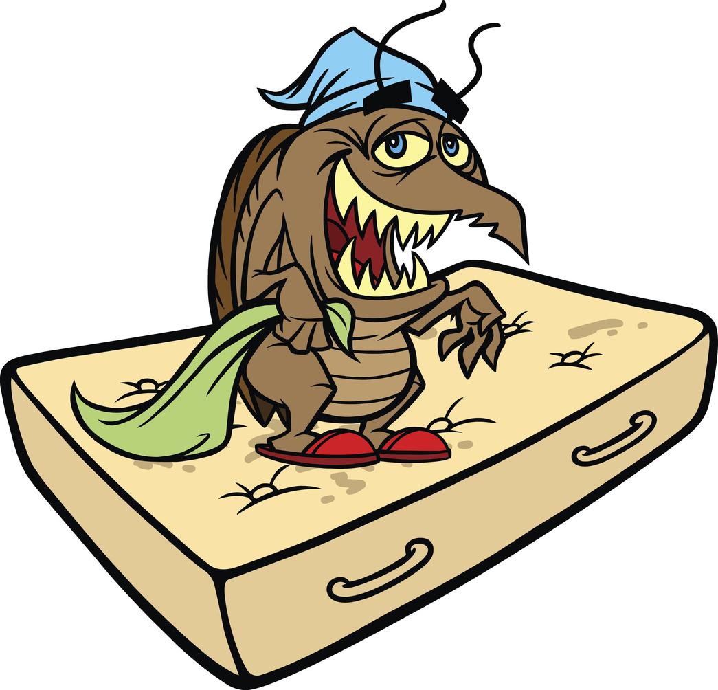 bed bug infestation