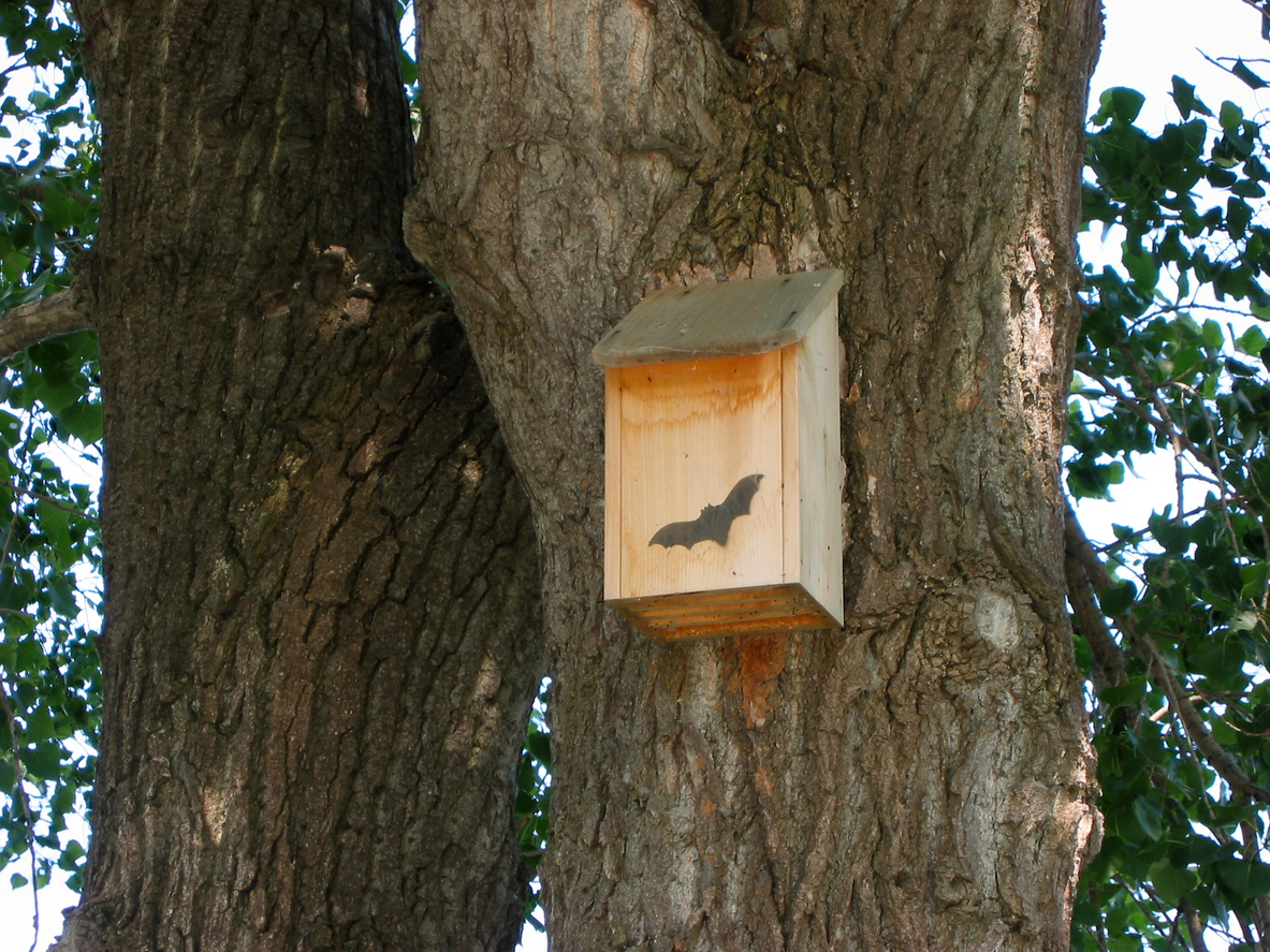 bat house to repel mosquitoes