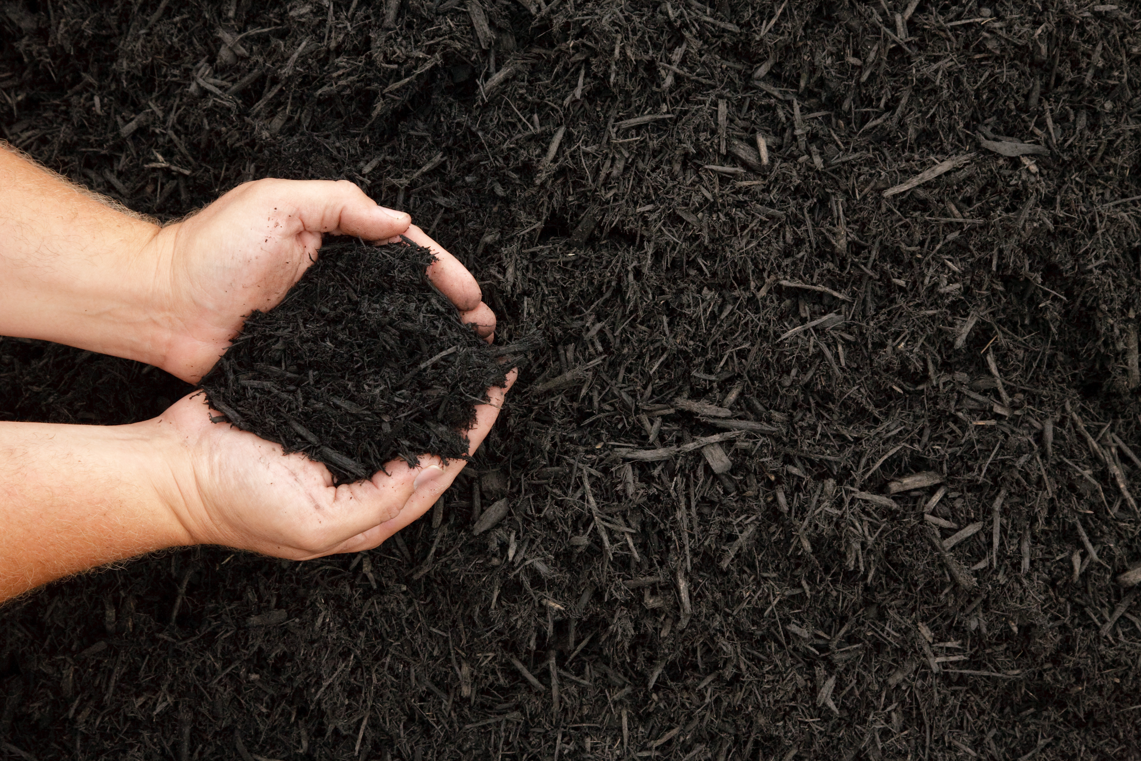 Does Mulch Attract Termites Knockout Pest Control