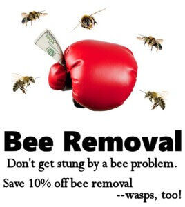 Bee Removal Coupon | Save 10% Off Bee & Wasp Removal