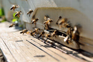 Bee Hive with Bees Buzzing